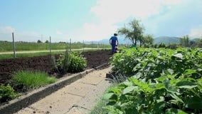 Αυξηθείτε τα λαχανικά στον πυροβολισμό γερανών εδάφους απόθεμα βίντεο