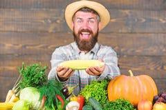 Αυξηθείτε τις οργανικές συγκομιδές Κοινοτικοί κήποι και αγροκτήματα r Λαβή της Farmer corncob ή ξύλινο υπόβαθρο αραβόσιτου στοκ εικόνα