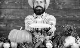 Αυξηθείτε τις οργανικές συγκομιδές Λαβή της Farmer corncob ή ξύλινο υπόβαθρο αραβόσιτου Farmer που παρουσιάζει τα φρέσκα λαχανικά στοκ εικόνες