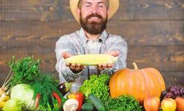 Αυξηθείτε τις οργανικές συγκομιδές Λαβή της Farmer corncob ή ξύλινο υπόβαθρο αραβόσιτου Farmer που παρουσιάζει τα φρέσκα λαχανικά στοκ φωτογραφία με δικαίωμα ελεύθερης χρήσης