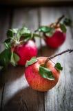 Αυξημένα αγρόκτημα μήλα στο ξύλινο υπόβαθρο στοκ φωτογραφία