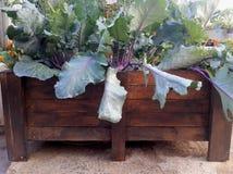 Αυξημένη κηπουρική εμπορευματοκιβωτίων Στοκ φωτογραφίες με δικαίωμα ελεύθερης χρήσης