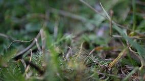 Αυξημένη χλόη κίνηση φύσης φιλμ μικρού μήκους