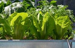 Αυξημένος αστικός κήπος οπωρώνων κρεβατιών στοκ φωτογραφία με δικαίωμα ελεύθερης χρήσης