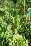 Αυξημένο κρεβατιών μέταλλο κήπων οπωρώνων αστικό στοκ φωτογραφία