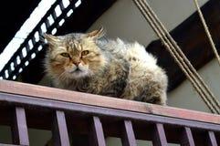 Αυστηρή γάτα Στοκ φωτογραφία με δικαίωμα ελεύθερης χρήσης