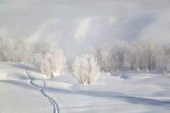 Αυστηροί παγετός, σιωπή και επιείκεια στοκ φωτογραφία