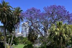 Αυστραλία, NSW, Σίδνεϊ, βασιλικός βοτανικός κήπος Στοκ Φωτογραφίες