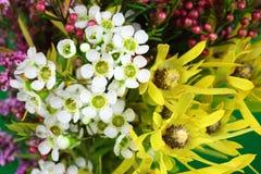 Αυστραλιανά εγγενή λουλούδια Στοκ φωτογραφία με δικαίωμα ελεύθερης χρήσης