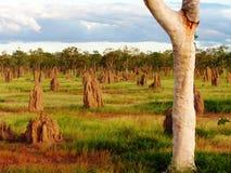 αυστραλιανός εσωτερικ Στοκ εικόνα με δικαίωμα ελεύθερης χρήσης
