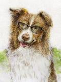 Αυστραλιανός ποιμένας που φορά τα γυαλιά στο μελάνι και το watercolor Στοκ φωτογραφίες με δικαίωμα ελεύθερης χρήσης