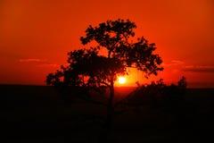 αυστραλιανό ηλιοβασίλεμα στοκ εικόνα με δικαίωμα ελεύθερης χρήσης