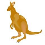 αυστραλιανό καγκουρό απεικόνιση αποθεμάτων