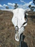 Αυστραλιανό κρανίο εσωτερικών στοκ εικόνα με δικαίωμα ελεύθερης χρήσης