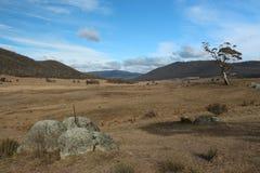 Αυστραλιανή κοιλάδα εσωτερικών - ΝΟΜΟΣ Στοκ Εικόνα