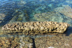 Αυστραλιανή κοραλλιογενής ύφαλος, Currarong NSW Στοκ Φωτογραφίες