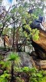 αυστραλιανός θάμνος Στοκ Εικόνες