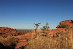 Αυστραλιανό δέντρο εσωτερικών Στοκ φωτογραφία με δικαίωμα ελεύθερης χρήσης