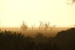 Αυστραλιανό αγρόκτημα θύελλας σκόνης Στοκ Εικόνες