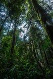 Αυστραλιανό τροπικό τροπικό δάσος Στοκ Φωτογραφία