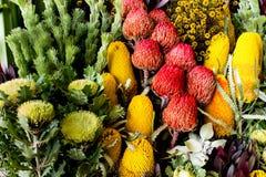 Αυστραλιανό banksia wildflowers, waratah, μαργαρίτα στοκ εικόνα