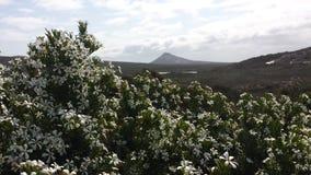 Αυστραλιανό Wildflower Στοκ εικόνα με δικαίωμα ελεύθερης χρήσης