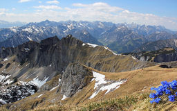 Αυστριακές σειρά και γεντιανή βουνών Στοκ εικόνες με δικαίωμα ελεύθερης χρήσης