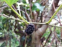 Αυτά είναι εύγευστα φρούτα στοκ φωτογραφίες με δικαίωμα ελεύθερης χρήσης