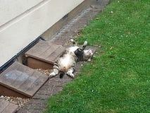 Αυτή είναι η ζωή στη διαβίωση στη διάβαση γατών στοκ εικόνες με δικαίωμα ελεύθερης χρήσης