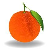Πορτοκάλι. Διάνυσμα Στοκ Εικόνες