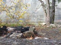 Αυτή η πυρκαγιά ήταν εκεί στοκ εικόνες