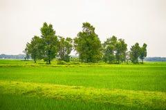 Αυτή η όμορφη εικόνα της φύσης ρέει στην εικόνα στοκ εικόνες με δικαίωμα ελεύθερης χρήσης