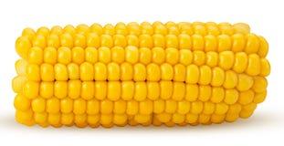 Αυτί του καλαμποκιού Φρέσκο corncob, περικοπή στο μισό στοκ φωτογραφία
