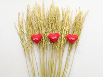 Αυτί του ρυζιού και του σημαδιού που παρουσιάζουν στην καρδιά κεντημένη κόκκινη αγάπη επιστολών Στοκ φωτογραφία με δικαίωμα ελεύθερης χρήσης