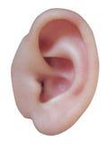 αυτί s μωρών στοκ φωτογραφία με δικαίωμα ελεύθερης χρήσης