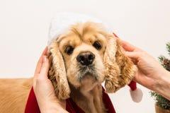 Αυτιά και παιχνίδι σκυλιών ` s εκμετάλλευσης κοριτσιών με το σκυλί του Στοκ φωτογραφίες με δικαίωμα ελεύθερης χρήσης
