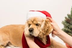 Αυτιά και παιχνίδι σκυλιών ` s εκμετάλλευσης κοριτσιών με το σκυλί του Στοκ φωτογραφία με δικαίωμα ελεύθερης χρήσης