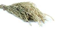 αυτιά του ρυζιού στο λευκό στοκ φωτογραφία με δικαίωμα ελεύθερης χρήσης