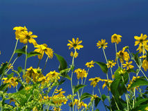αυτοί κίτρινοι Στοκ εικόνες με δικαίωμα ελεύθερης χρήσης