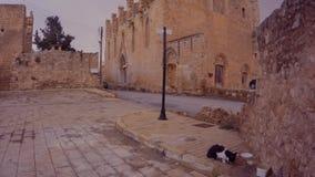 Αυτοκίνητο και γάτα στις αρχαίες οδούς στο κέντρο του φρουρίου Famagusta απόθεμα βίντεο