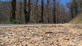 Αυτοκίνητο που περνά από τα μμένα δέντρα, σειρές Dandenong, Αυστραλία απόθεμα βίντεο