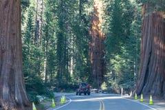 Αυτοκίνητο τουριστών Suv και γιγαντιαία δέντρα στο Sequoia και φαραγγιών βασιλιάδων εθνικό πάρκο, Καλιφόρνια, ΗΠΑ Ταξίδι αυτοκινή στοκ εικόνες με δικαίωμα ελεύθερης χρήσης