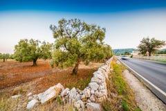 Αυτοκινητόδρομος κατά μήκος των αλσών ελιών Apulian Στοκ εικόνα με δικαίωμα ελεύθερης χρήσης
