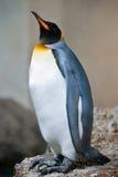 αυτοκράτορας penguin Στοκ Εικόνα