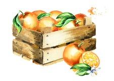 αυτοκόλλητη ετικέττα πορτοκαλιών απεικόνισης κιβωτίων Hand-drawn απεικόνιση Watercolor, που απομονώνεται στο άσπρο υπόβαθρο διανυσματική απεικόνιση