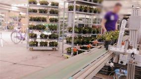 Αυτοματοποιημένη διαδικασία τους γραμμωτούς κώδικες στα δοχεία των λουλουδιών σε ένα σύγχρονο θερμοκήπιο Να κολλήσει κώδικες φραγ απόθεμα βίντεο