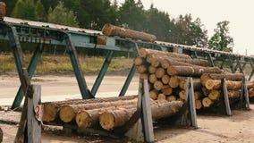 Αυτοματοποιημένος μεταφορέας σε ένα εργοστάσιο ξυλουργικής Ζώνη μεταφορέων στο σύγχρονο πριονιστήριο απόθεμα βίντεο