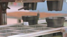 Αυτόματη συσκευασία στην επιχείρηση, αυτοματοποιημένη γραμμή στο εργοστάσιο ανάπτυξης λουλουδιών Σύγχρονο θερμοκήπιο Αυτοματοποιη φιλμ μικρού μήκους