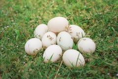 Αυτό είναι ένα αυγό Στοκ εικόνες με δικαίωμα ελεύθερης χρήσης