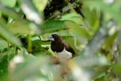 Αυτό είναι ένα chaffinch σε ένα δέντρο στοκ φωτογραφίες